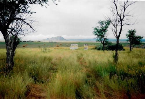Sturgis Honey Bear Butte South Dakota