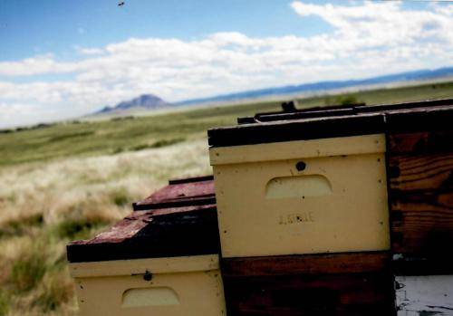 Sturgis Honey Bee Hive