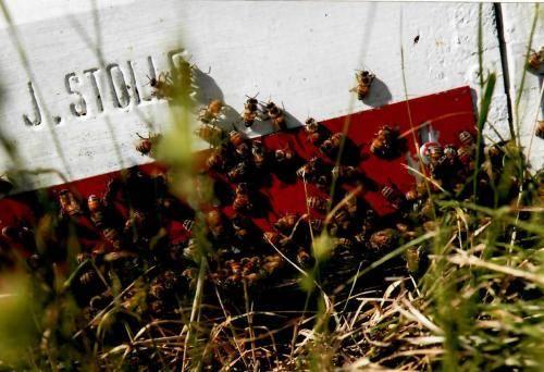 Sturgis Honey Bee Hives