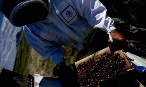 Sturgis Honey Bee Keeping