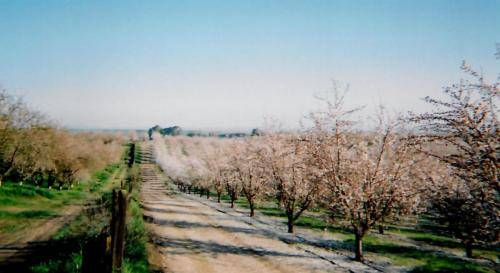 Sturgis Honey California Almond Winter Home Bee Hives Location