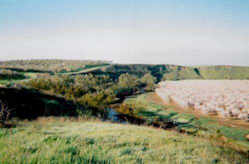Sturgis Honey California Almond Winter Home Dry Creek Sierra View Ranch