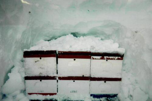 Sturgis Honey Winter Comes Early to South Dakota